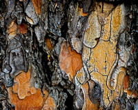 The Intimate Beauty of Bark