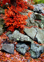 Fractured Rock & Autumn Color