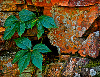 Rock, Lichens & Leaves