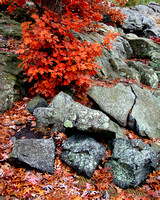 Fractured Rock & Autumn Color - Interstate State Park, MN