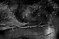 Dead Branch over the Trade River #5374