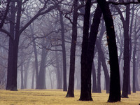 Foggy Oak Savannah - Minnehaha Park - Minneapolis, MN