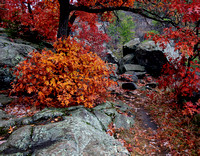 Rocky Path & Autumn Color - Interstate State Park, MN