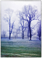 Trees in the fog at Como Park