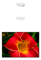 Red & Yellow lily card