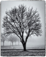 State Fair Parking Lot Tree in Fog